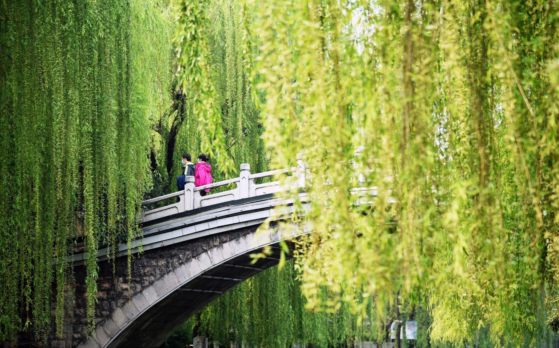 La gente si gode il paesaggio primaverile a Jinan