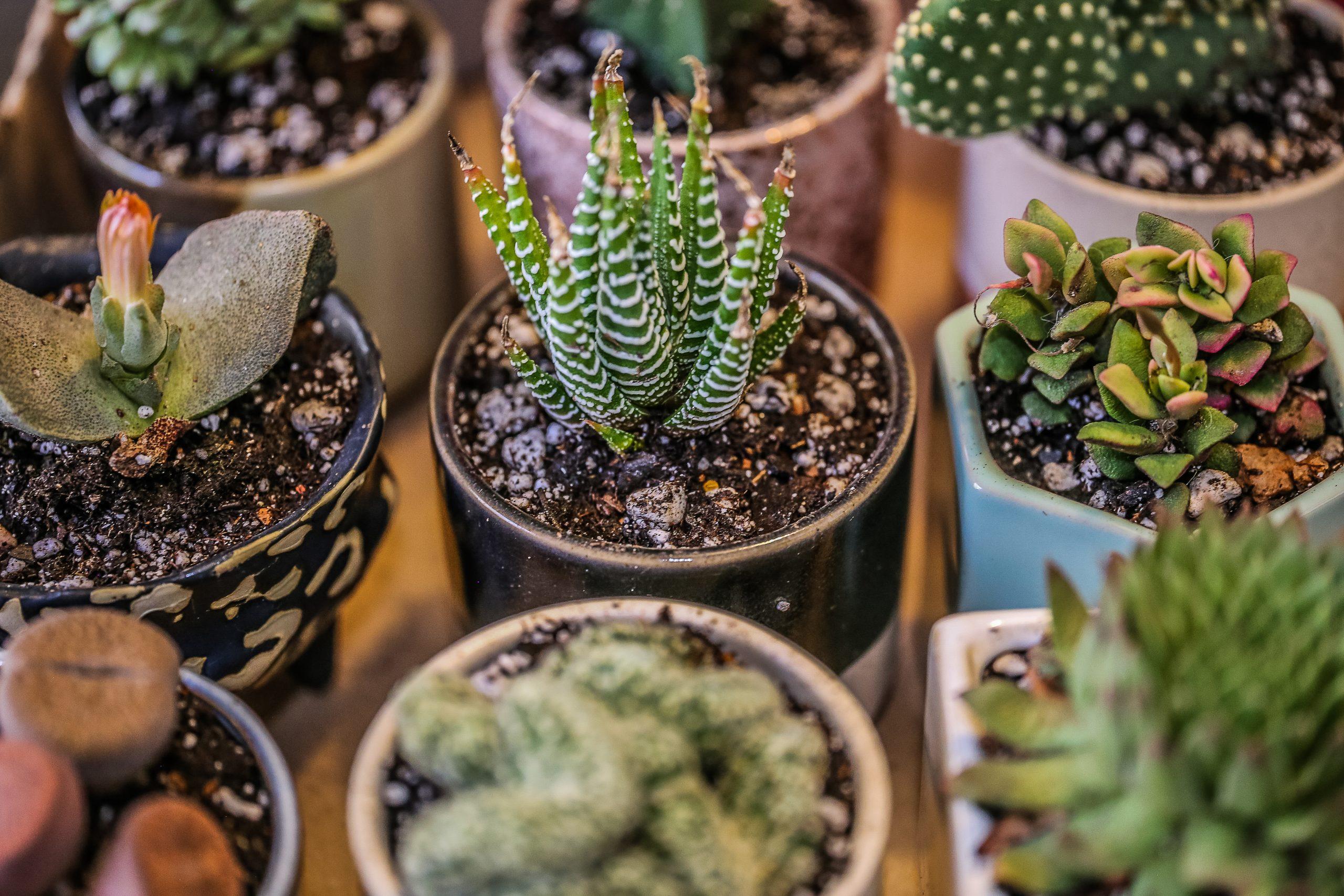 Ecco le 10 piante che non possono mancare nella tua abitazione